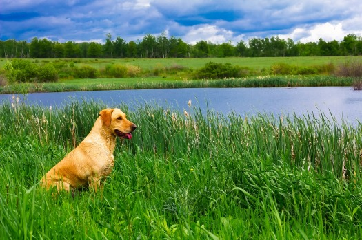 natural remedy dog in field