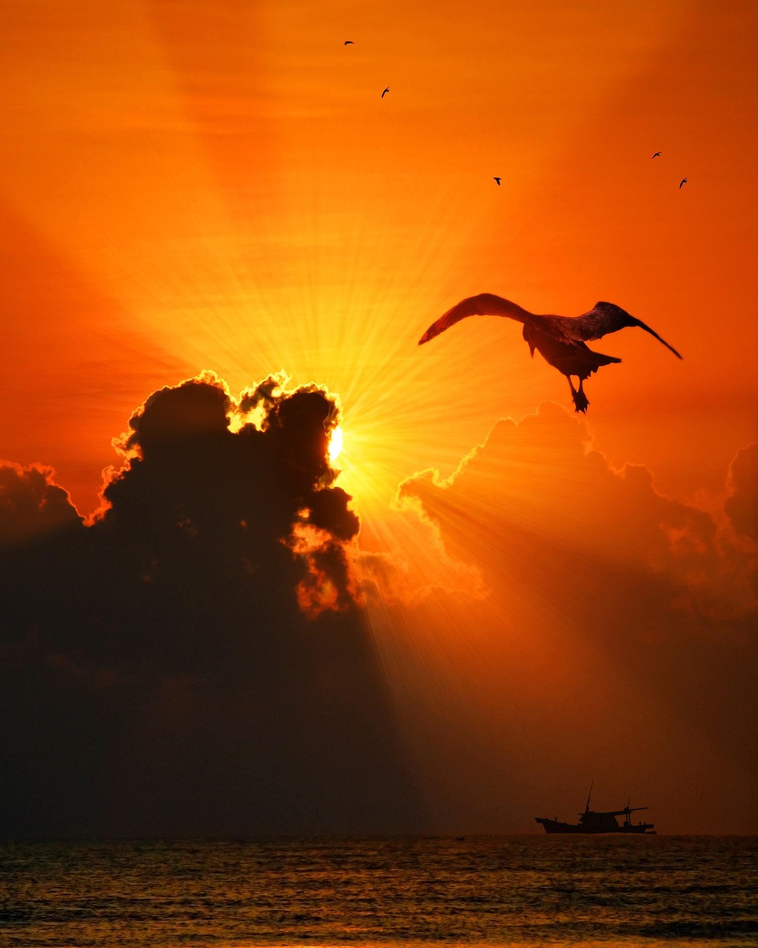 bird flying sunset