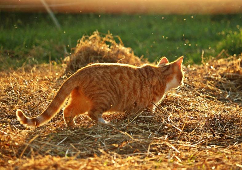 cat playing sunshine