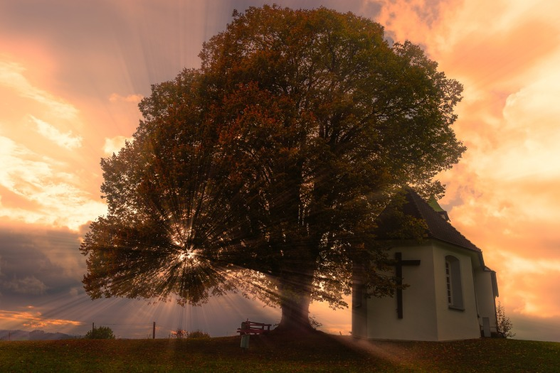 church tree landscape sun