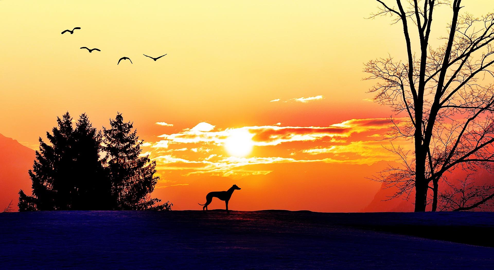 dog landscape sunset