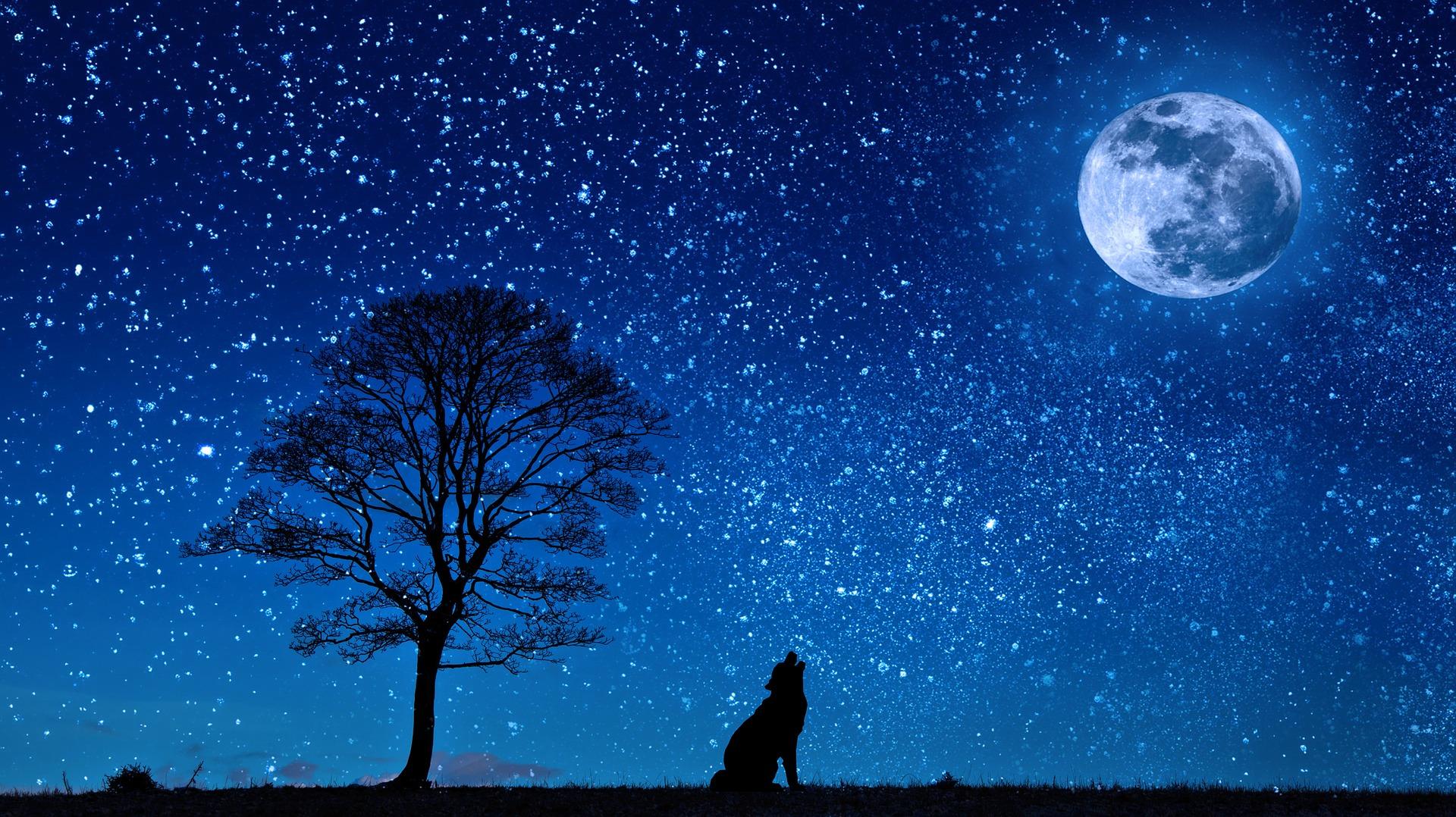 dog night moon howl