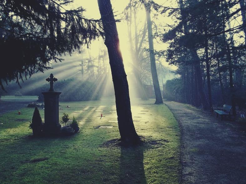 grave forest sunlight