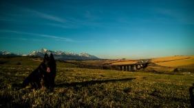 bridge black dog grass
