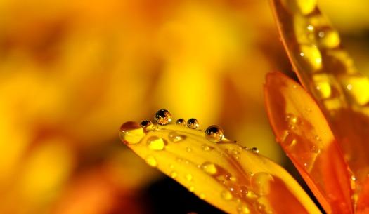 rain yellow leaf