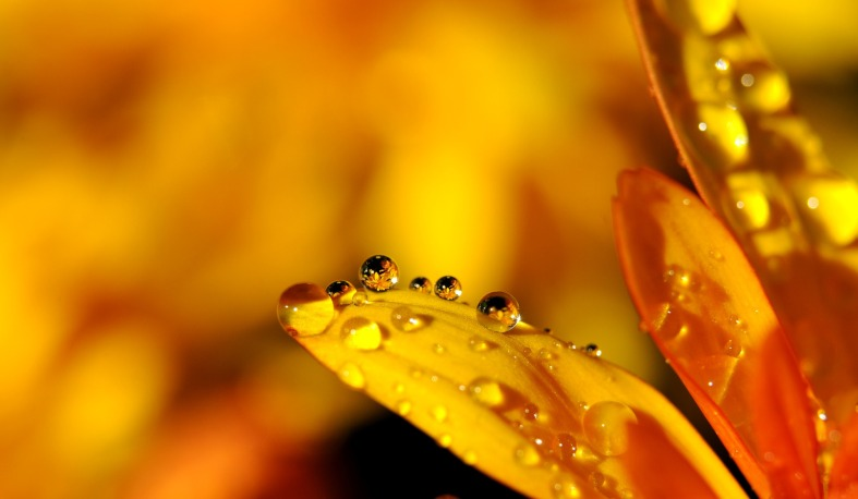rain yellow leaf