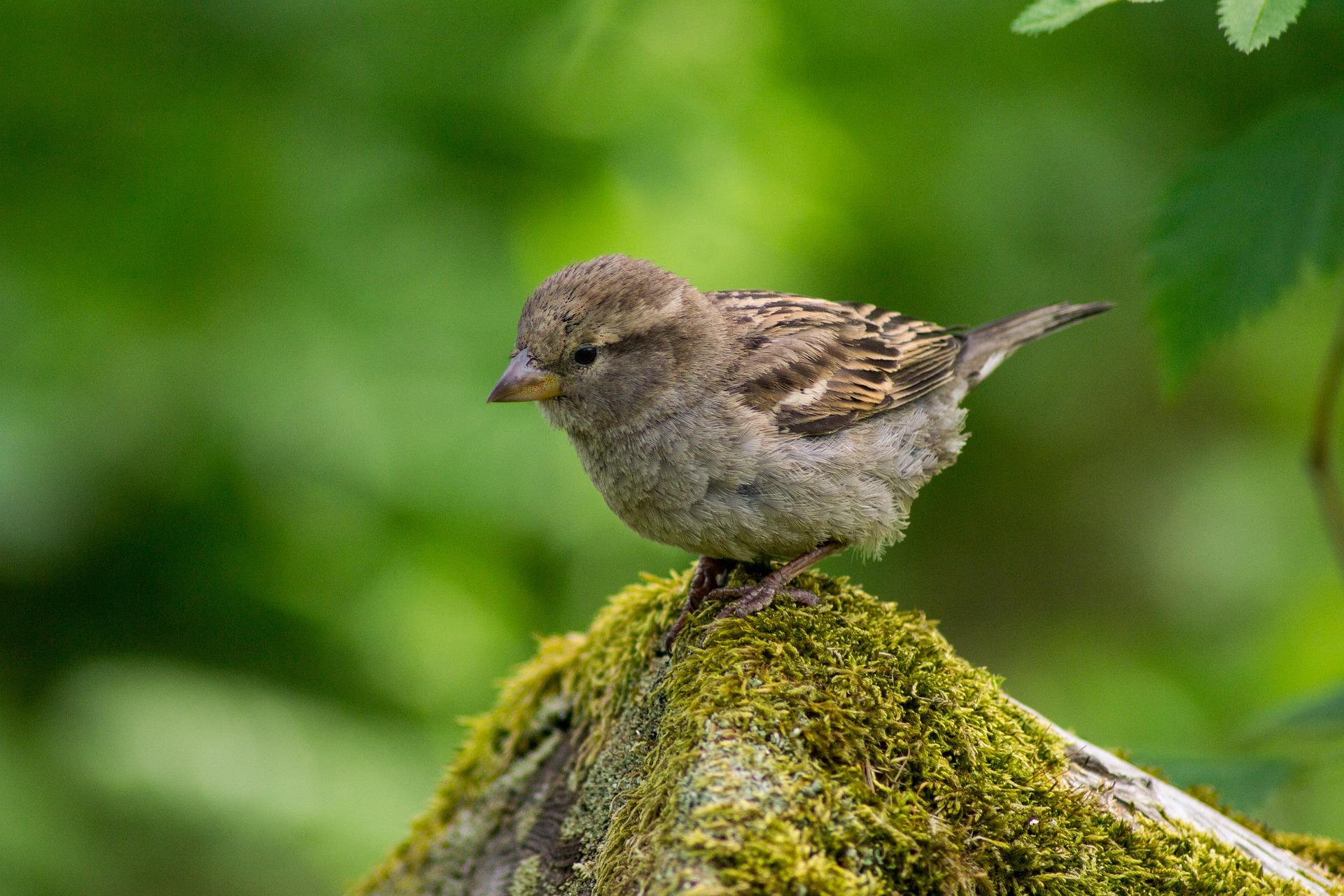 sparrow rock green