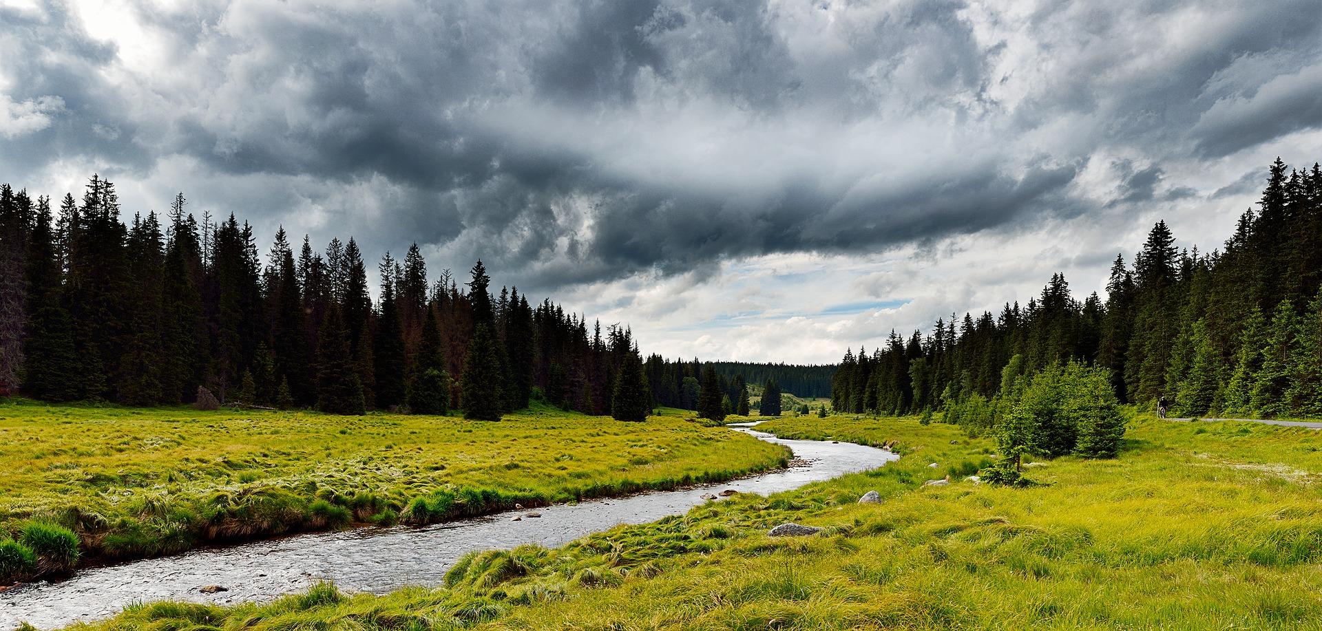 stream grass