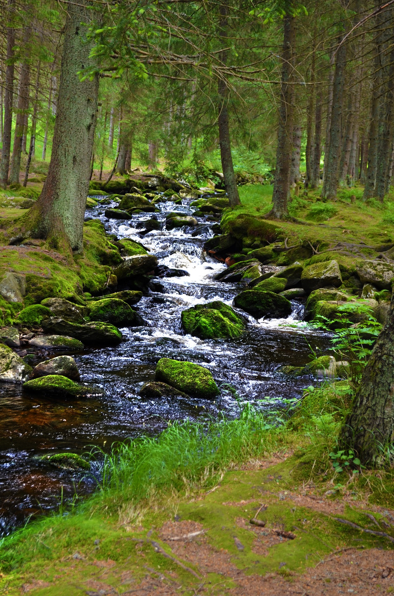 stream forest