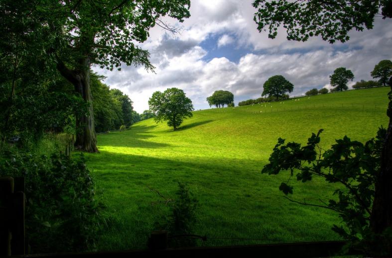 sun meadows landscape