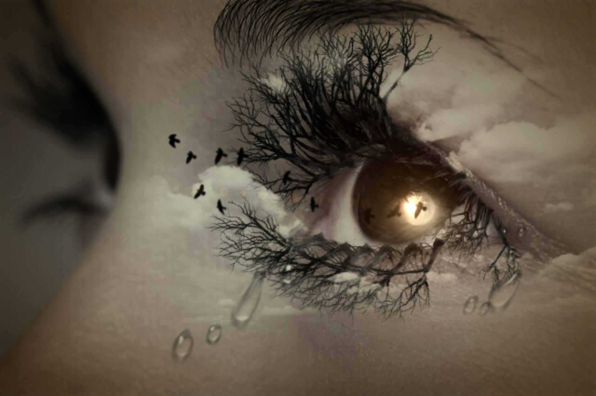 tears eye birds eyelashes