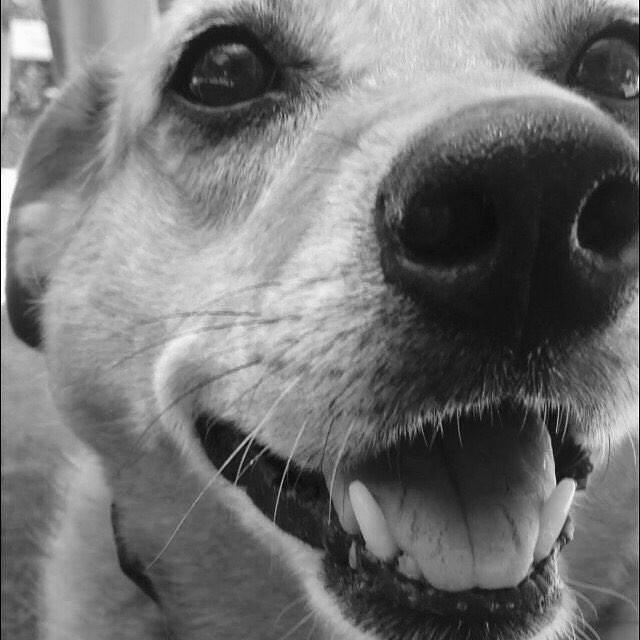 macey carlina dog