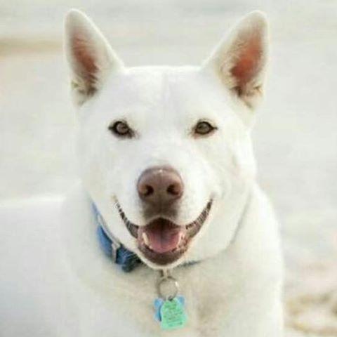frankie white dog