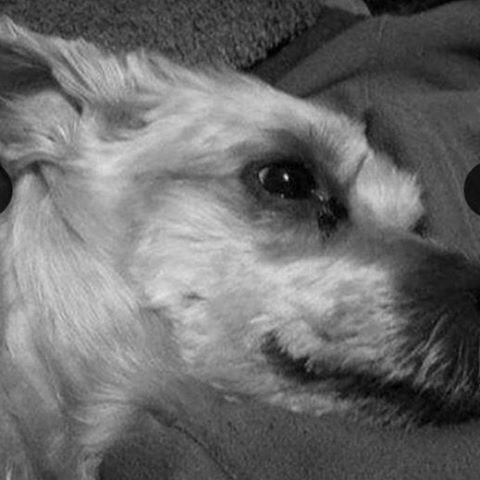 denzil dog
