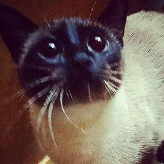 mindy cat