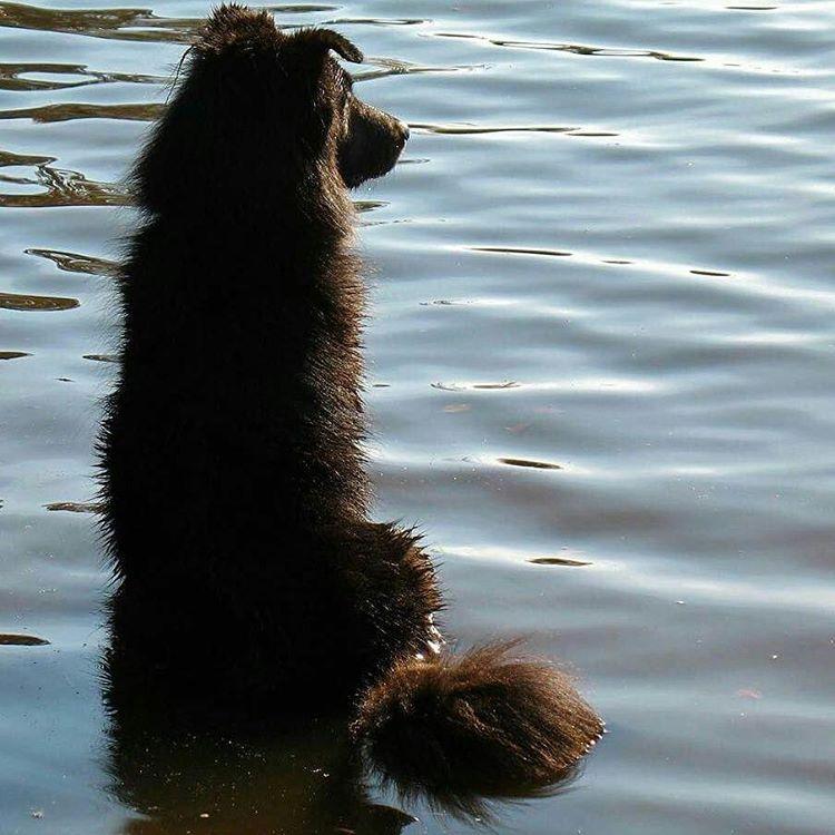 jackie dog water