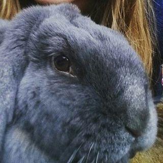 manon rabbit