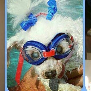 mary white dog