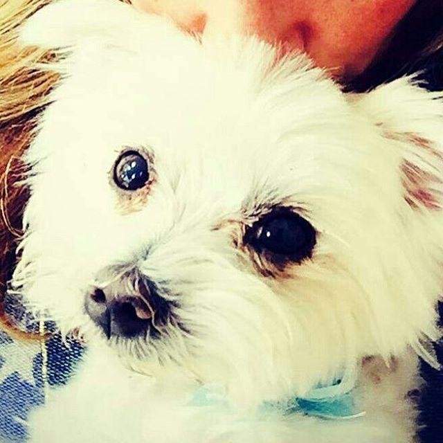 sonny white dog