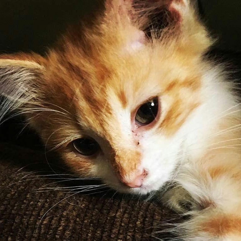 willow cat
