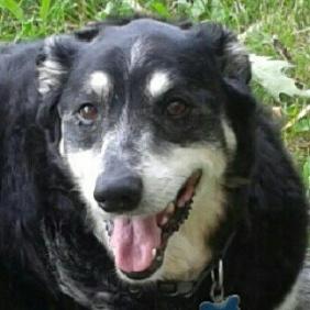 talon staff dog