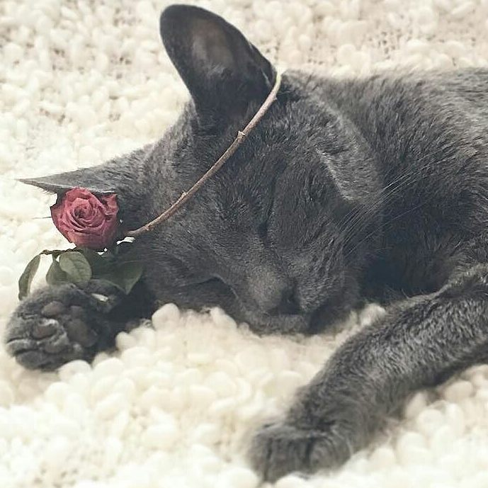 bitties, black, cat